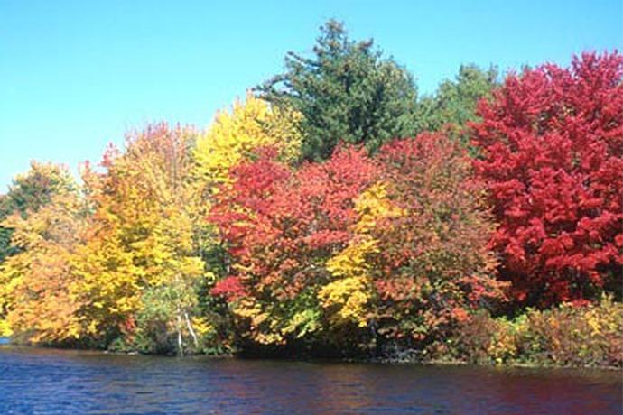 Fall Foliage Autumn 2014_-4517985007514402732