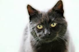 cat_1489413275107.jpeg