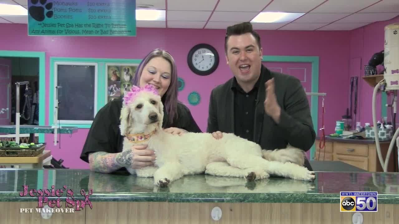 Jessies Pet Spa Juno
