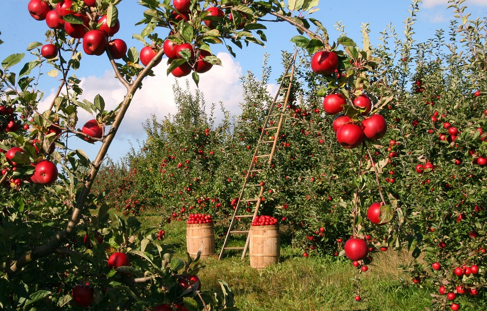 apple-1873078_960_720_1536067374261.jpg