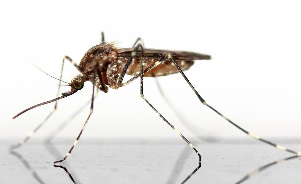 mosquito-83639_960_720_1537532998475.jpg