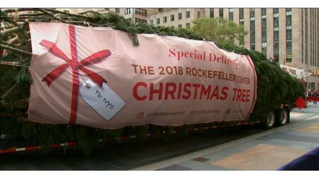 2018 Rockefeller Christmas Tree arrives_1541868622560.JPG_61692684_ver1.0_640_360_1541878650570.jpg_61703797_ver1.0_640_360_1542031595156.jpg.jpg