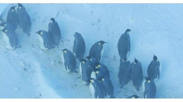 Penguins in film_1542716190161.jpg_62691020_ver1.0_640_360_1542725995653.jpg_62702819_ver1.0_640_360_1542732839444.jpg.jpg
