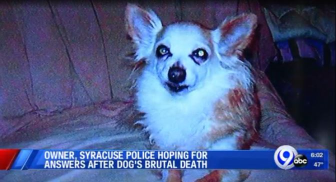 dog beaten to death in syracuse back yard_1541080353503.JPG.jpg