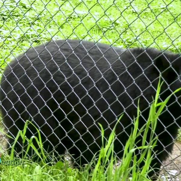 EdZooCation: Bears