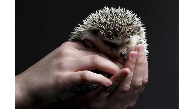 hedgehog-3209499_960_720_1548684425158_69154203_ver1.0_640_360_1548688414406.jpg