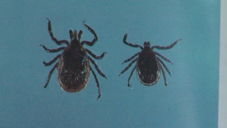 Rapid Lyme disease test could be available by late 2020
